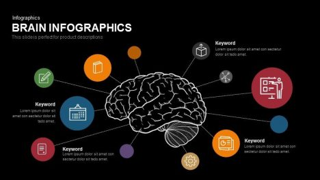 Brain Infographics Powerpoint and Keynote template