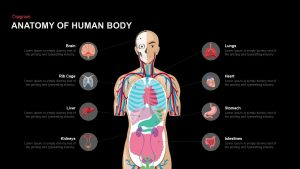 Anatomy of the Human Body PowerPoint Template and Keynote